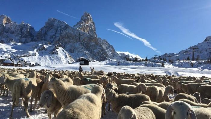 Museo geologico delle Dolomiti a Predazzo (iniziative ed attività ...